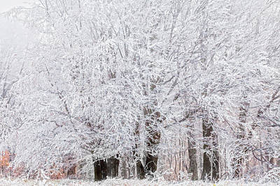 Bulgaria Photograph - Frozen Trees by Evgeni Dinev