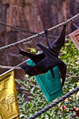 Fruit Bat Original