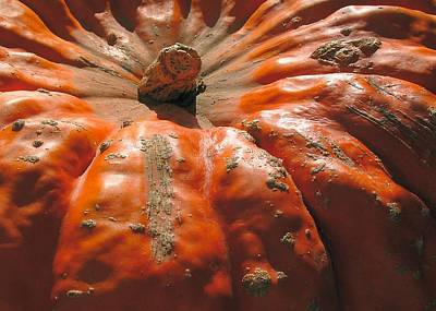 Photograph - Fruitandveggies A Knobbled Gnarley Pumpkin Hybrid by William OBrien