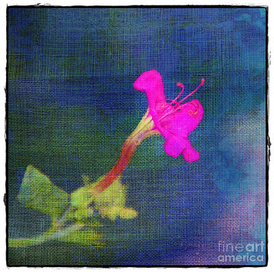 Photograph - Fuchsia Flower by Judi Bagwell