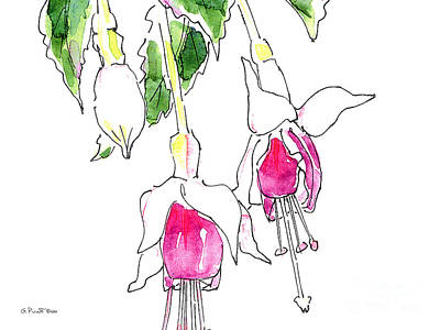 Painting - Fuchsia Watercolor Painting 1a by Gordon Punt