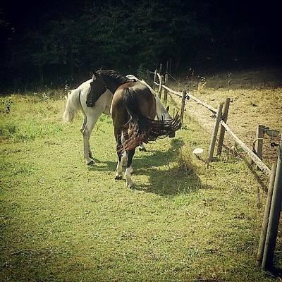 Pferde Photograph - Fuchur Und Limance <3  #pferde by Katrin Woerner
