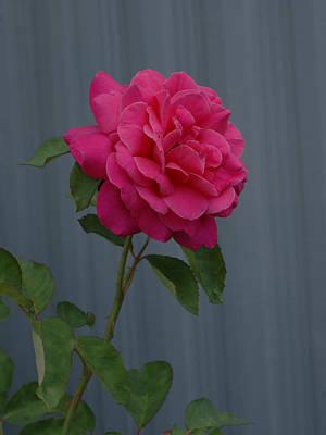 Photograph - Full Bloom by Ernie Echols
