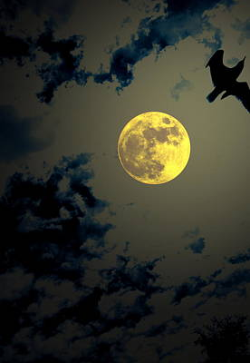 Full Moon Photograph - Full Flyby by Emily Stauring