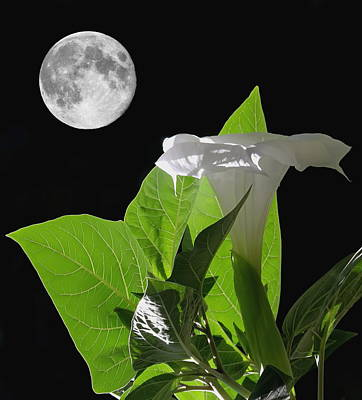 Moonlit Night Photograph - Full Moon Flower by Angie Vogel