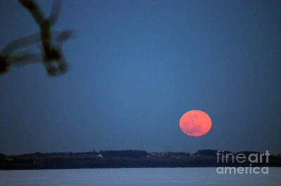 Photograph - Full Moon In February by Jack G  Brauer