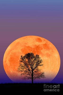 Photograph - Full Moon by Larry Landolfi and Photo Researchers