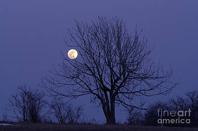 Lamdscape Photograph - Full Moon by Michal Boubin