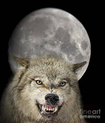 Wolves Photograph - Full Moon Wolf by Wildlife Fine Art