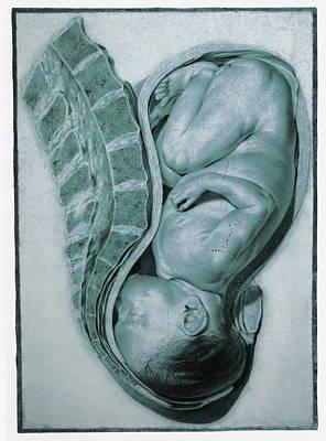 Full-term Foetus At 40 Weeks Art Print by Mehau Kulyk