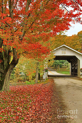 Fallen Leaf Photograph - Fuller Bridge by Deborah Benoit