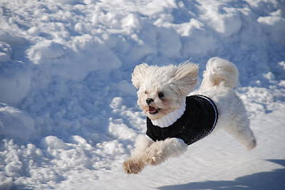 Photograph - Fun In The Snow by Lisa  DiFruscio