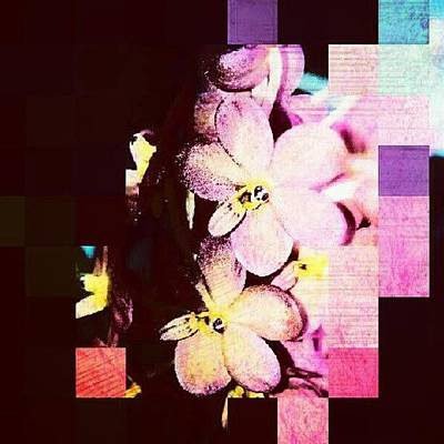 Orchids Photograph - #fun #orchid #editfever #editoftheday by Natalia D