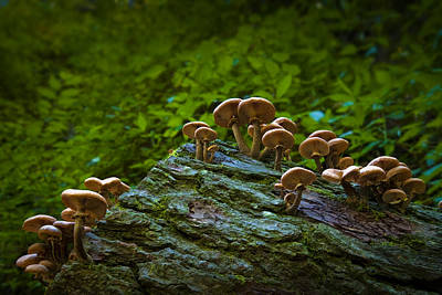 Photograph - Fungi Forest by Ryan Heffron