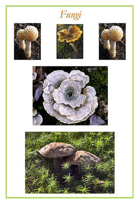 Photograph - Fungi Poster by Frank Winters