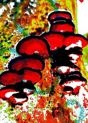 Photograph - Fungus In Red by Renate Nadi Wesley