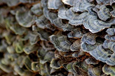 North America Photograph - Fungus by LeeAnn McLaneGoetz McLaneGoetzStudioLLCcom