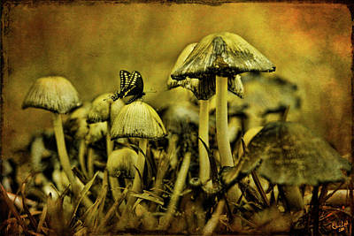 Toadstool Digital Art - Fungus World by Chris Lord