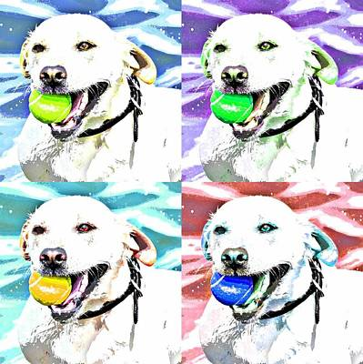 Dog Pop Art Photograph - Funky Labrador  by Fraida Gutovich