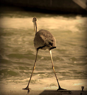 Photograph - Funny Flamingo by Radoslav Nedelchev