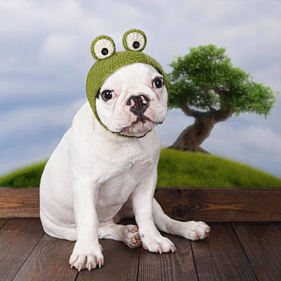 Funny French Bulldog Puppy Art Print by Maika 777