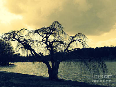 Photograph - Furman Lake Tree by Crystal Joy Photography