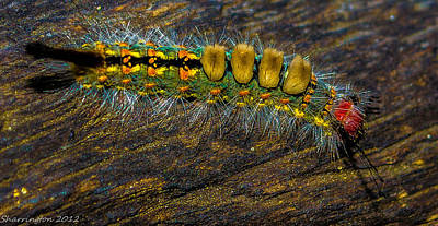 Photograph - Fuzzy Caterpillar by Shannon Harrington