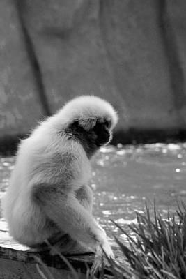 Photograph - Fuzzy Monkey 002 by Elizabeth  Doran