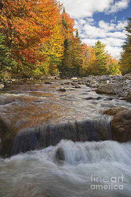 Gale River - White Mountains New Hampshire Art Print by Erin Paul Donovan