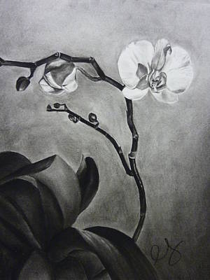 Drawing - Galen's Orchid by Estephy Sabin Figueroa
