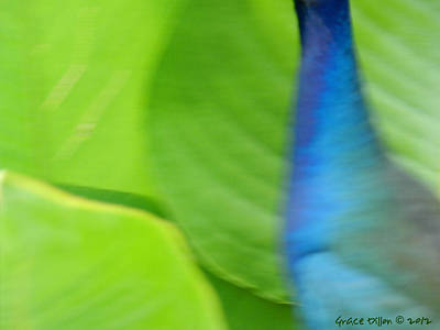Photograph - Gallinule Abstract by Grace Dillon