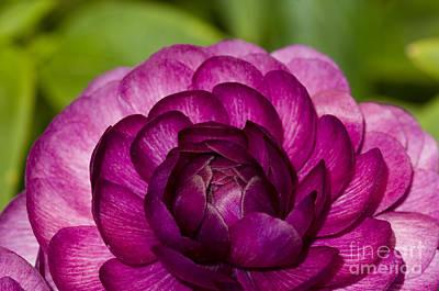 Photograph - Garden Beauty by Sandra Bronstein