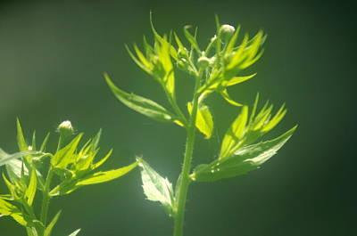 Photograph - Garden Flower 1 by Douglas Pike