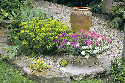 Stone Flower Planter Photograph - Garden Flowers And Plant Pot by Archie Young