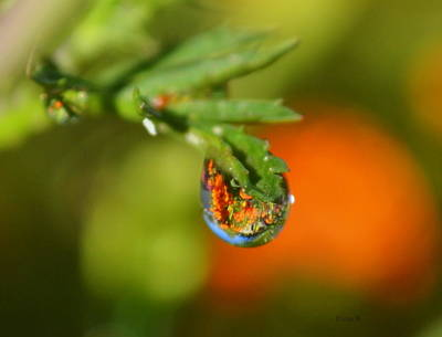 Photograph - Garden In A Drop by Rima Biswas