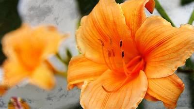 Photograph - Garden Lily by Davandra Cribbie