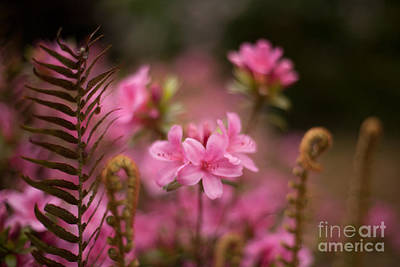 Spring Photograph - Garden Of Friends by Mike Reid