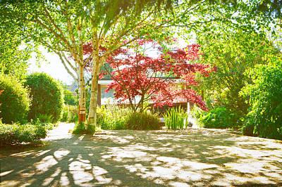 Dappled Photograph - Garden Shade by Tom Gowanlock