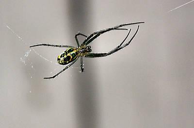Photograph - Garden Spider by Kristin Elmquist
