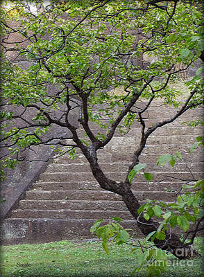 Photograph - Garden Stairs by Eena Bo
