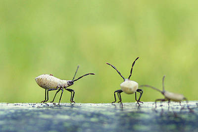 Photograph - Garden Variety Nymphs by Bill Pevlor
