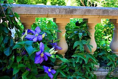 Kitchen Mark Rogan - Garden Wall With Periwinkle Flowers by Nancy Mueller