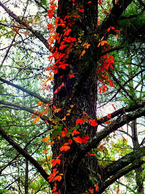 Of Autumn Photograph - Garland Of Autumn by Karen Wiles
