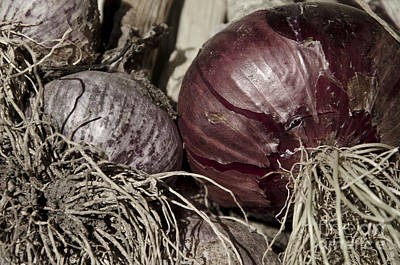 Photograph - Garlic And Onions by Jim And Emily Bush