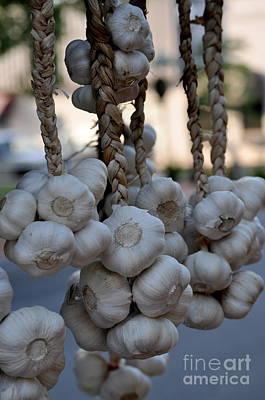 Garlic Art Print by Nicky Dou