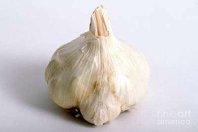 Photograph - Garlic by Photo Researchers, Inc.