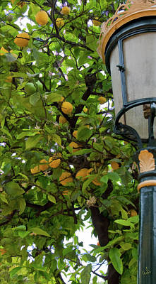 Photograph - Gas Light In A Lemon Grove by Michael Flood