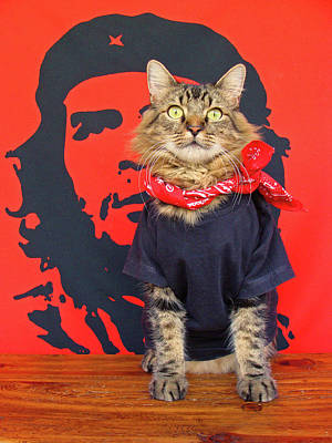 Art Print featuring the photograph Gato Guevara by Joann Biondi