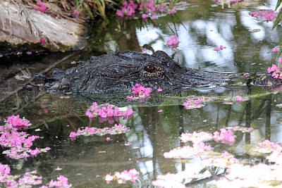 Photograph - Gator Among Crape Myrtle by Alycia Christine