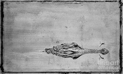 Gator And Dragonfly Print by Jim Wright